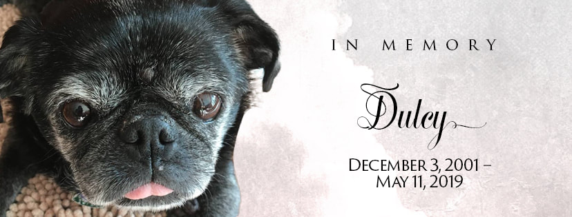 In Memory, Dulcy, Dec 3, 2001 - May 11, 2019. Pictured: an elderly black pug.